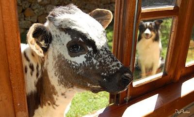 a bé e o rex na minha janela...