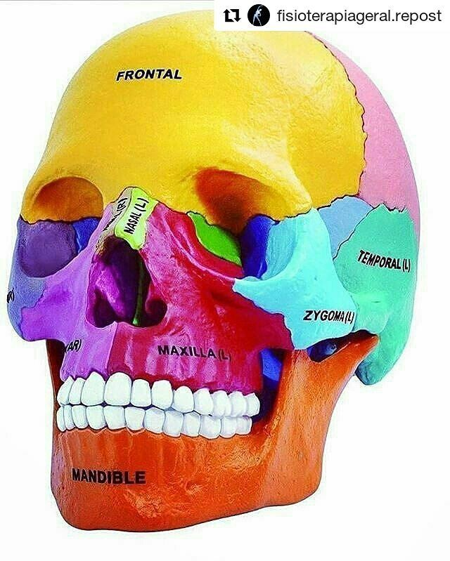 #Repost @fisioterapiageral.repost (@get_repost)  #Repost @anatomia.repost   Anatomy  #jeddah #anatomy #fisioterapia #fisioterapeuta #fisio #dentalassistant #dental #dentalschool #dentalstudent #medical #medicine #enfermagem #med #nurse #art#teeth#doctor#dubia#جدة#السعودية#تشريح#اناتومي#دبي#اسناني #ابتسامة#دكاتره#السعوديةدبي #السعودية_جدة