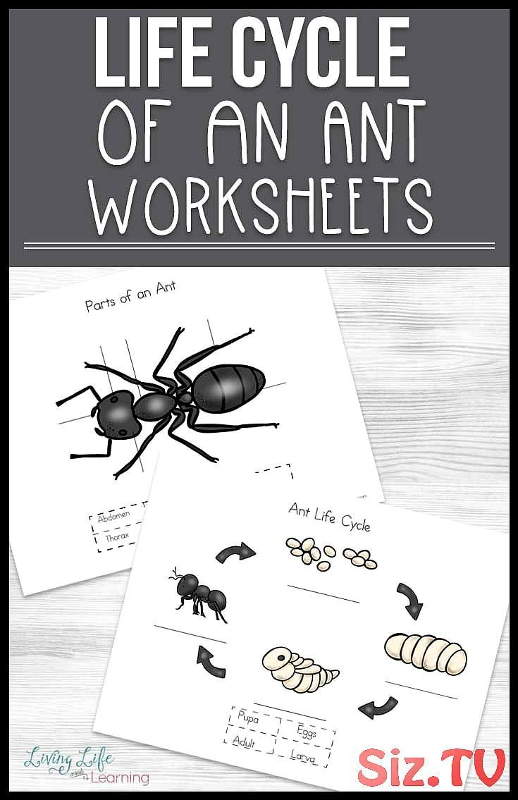Homeschool Worksheets Different Science Biology Stages Parts These Cycle Find Cute Name Bug Ant Life Cycle Life Cycles Science Activities For Kids [ 1135 x 735 Pixel ]