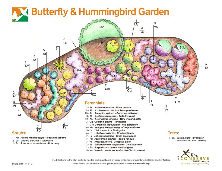 Butterfly Garden Using Native Plants. Hummingbird ...