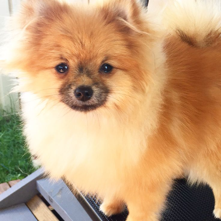 Sending lots of Sloppy Pom Kisses to all... Have a grand Friday Everyone!
