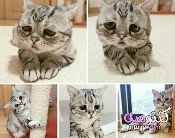 قطط حزينة قطة حزينة تبكي صور قطط حزينة صور القط الحزين Kntosa Com 10 19 157 Cats Animals Animal Tattoo