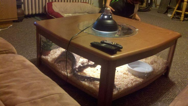 Homemade coffee table snake cage.    Snake terrarium, reptile cage, cage table. Michael Briehler