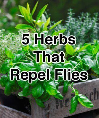 5 Herbs That Repel Flies. Carve out a space in your garden for each with an herb garden label. http://www.kincaidplantmarkers.com/