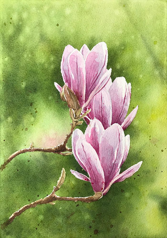 Watercolor Magnolia Finished Painting Flower Painting Watercolor Flowers Watercolor