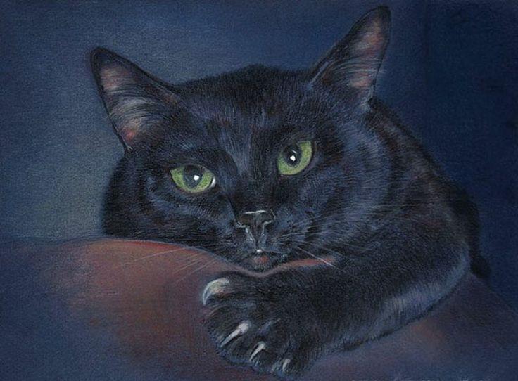 Магия кошек: почему кошка пришла именно к вам? / Мистика