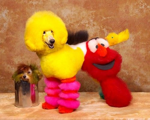 Exhibiciones caninas divertidas - personajes de Barrio Sésamo