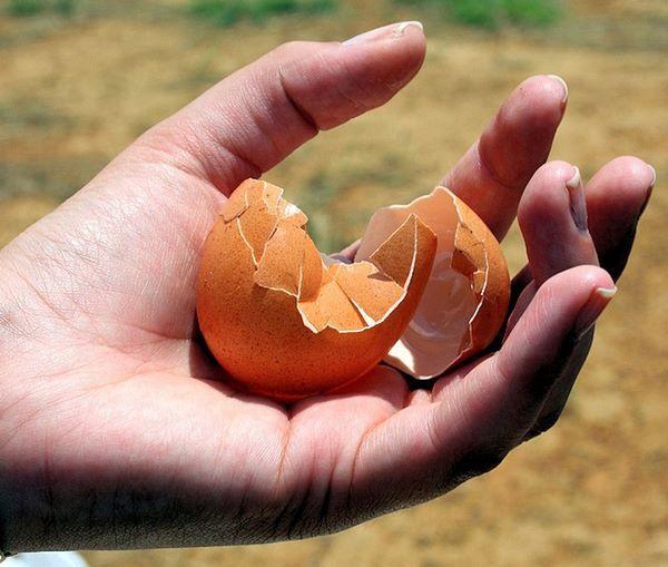 fotografia di guscio d'uovo rotto in mano