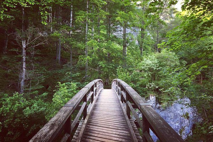 Get lost in wilderness #wilderness #nature #vocation #ferrata #bridge #wildlife #wild #holiday #travel #traveling #getlost #forest