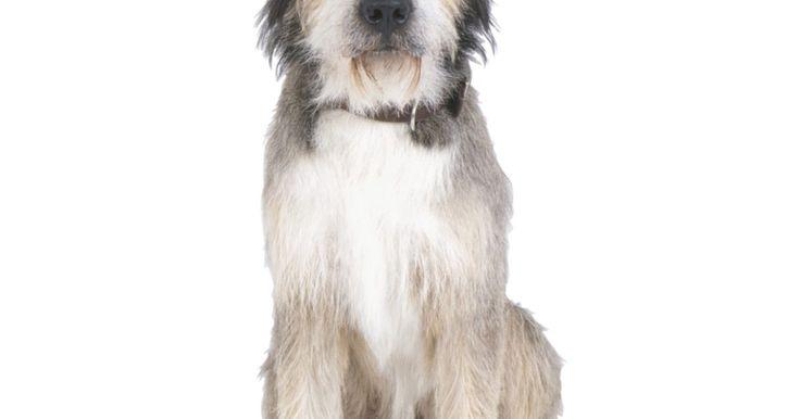 Cómo cortar el pelo de un perro. Amabas a tu perro cuando era cachorro porque parecía una bola de pelo. Ahora que ya creció totalmente, su pelo también. Y tu casa está cubierta de su pelo. Si te gustaría recortar un poco de ese pelo, puedes hacerlo con una maquina para cortar el pelo y unas tijeras, y tener unos muy buenos resultados. Al final tal vez tu perro no se vea como para ...