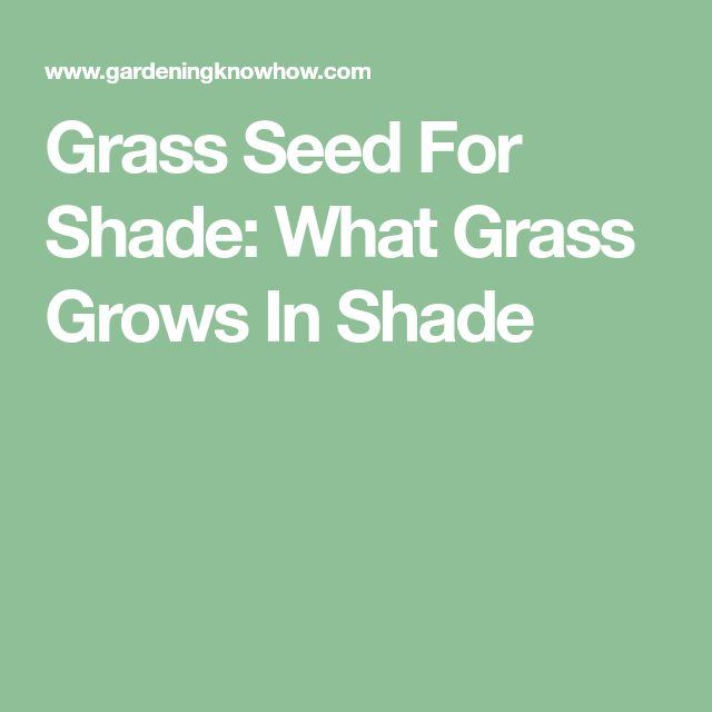Grass Seed For Shade: What Grass Grows In Shade