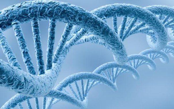 Выращивай стволовые клетки Сам - | thePO.ST