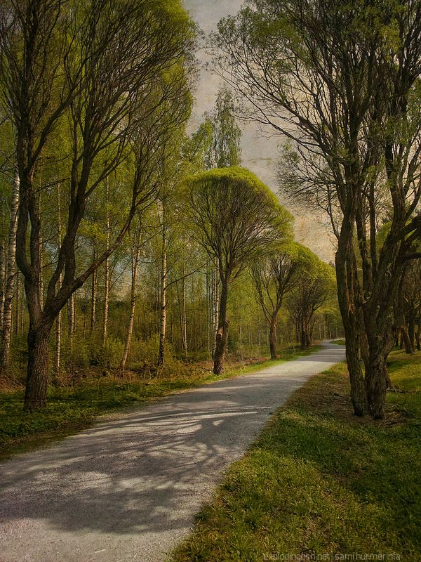 Long and winding road. A tree-lined road close to where I live - Copyright Sami Hurmerinta / Explodingfish.net. All Rights Reserved. #jyvaskyla #finland #spring #road #texture #landscapephotography