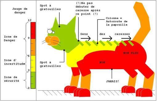 La notice du chat : pour caresser sans danger !