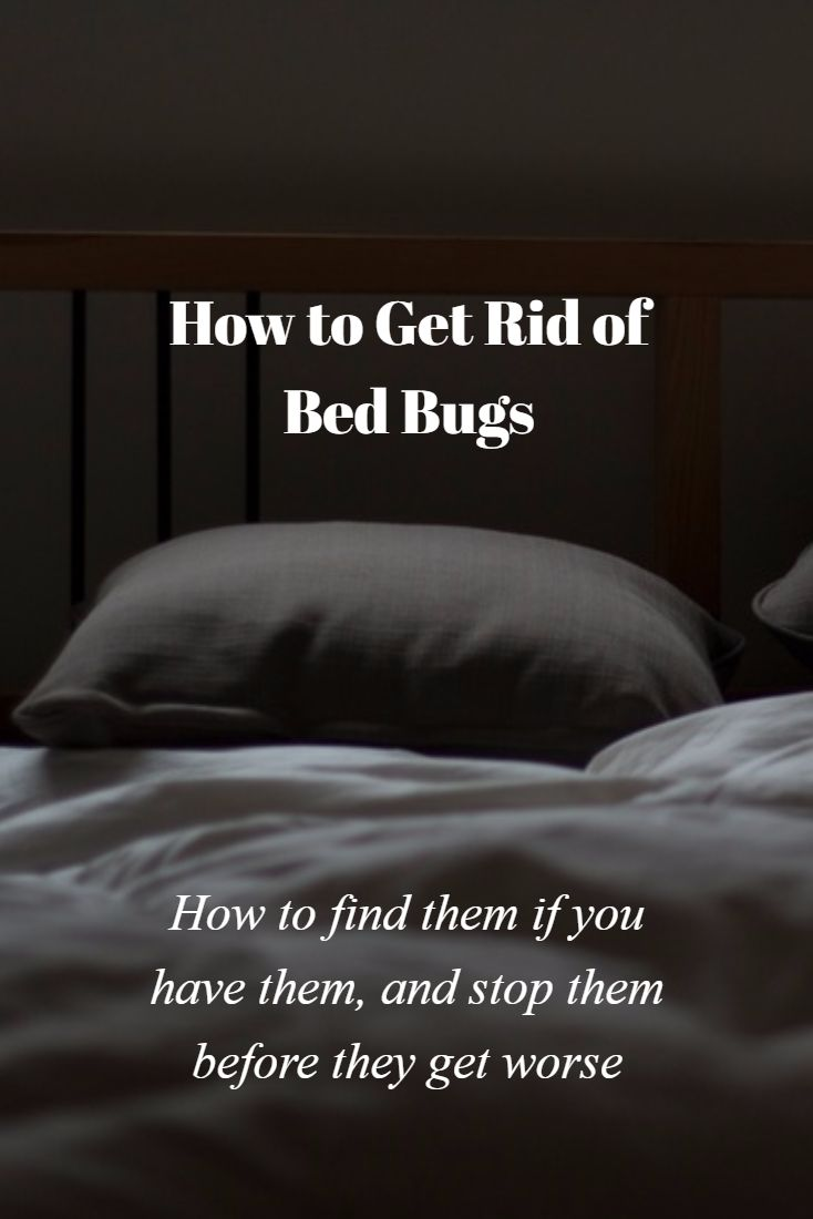 126 Best Bed Bugs Images On Pinterest