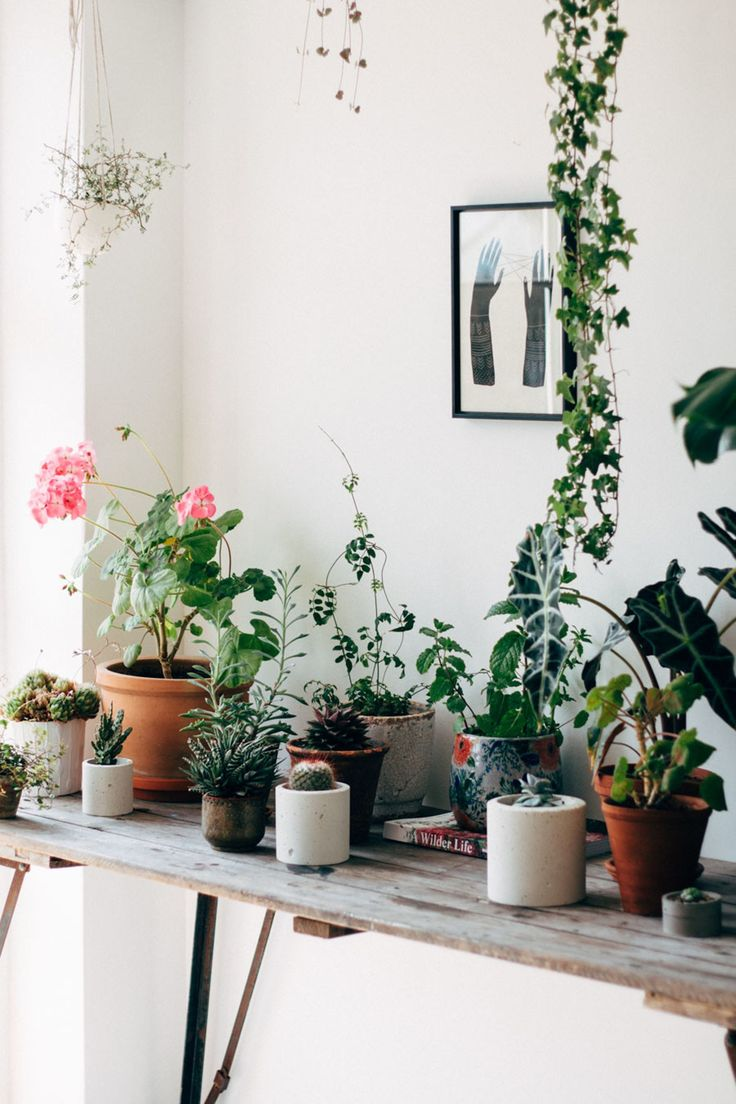 50 best Decorating with Bromeliads images on Pinterest   Bears ...
