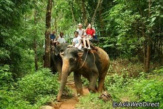 Elephant Trekking & River Camp in Krabi- Nature Tour in Krabi