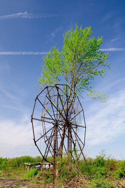 Overgrown ferris wheel at the abandoned amusement park in Chippewa Lake Park in Ohio, closed in 1978. First opened in 1878, the park has been unused for 31 years. Trees now grow through the ferris wheel and coaster tracks. Most of the rides are now gone, though the remnants of a few rides remain. Soon all the rides will be gone as a developer has bought the site  Source: malformalady