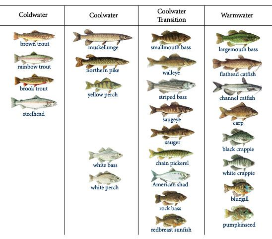 1000 images about fish list names on pinterest warm for All types of water