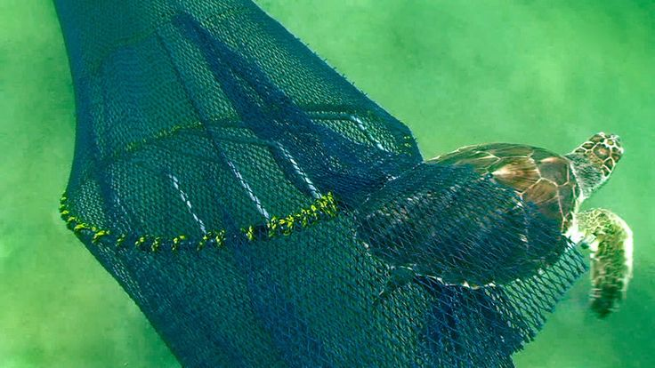 Petition · NOAA: Make it Illegal To Not Have A TED On Fishing Nets · Change.org