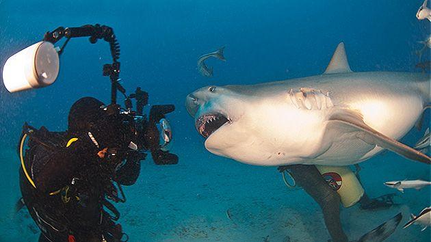 Un buzo retrata cara a cara al tiburón más aterrador del océano - RT