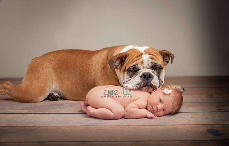 ❤ A fur baby ~ is just like the other babies in a family. And in this case, like an older sibling – a protector. Absolutely beautiful ! ❤ Posted on Bulldog Lovers