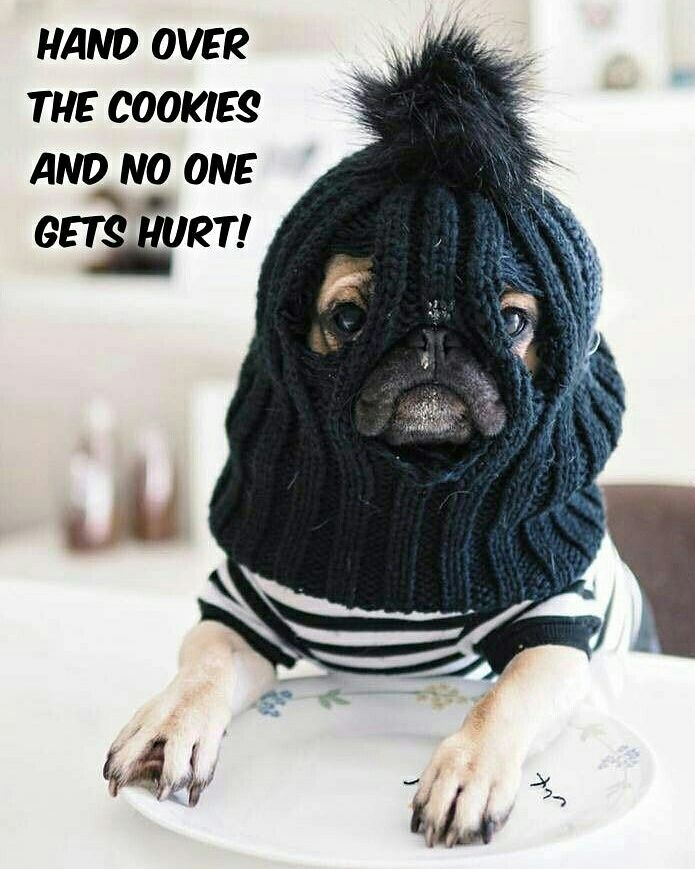 Don't come between a pug and their treats!