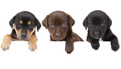 #Curso #Ayudante #Técnico #Veterinario  http://www.cursosccc.com/a-distancia/curso-ayudante-tecnico-veterinario?codigo=ADAZ&utm_source=red-social&utm_medium=pinterest&utm_term=foto&utm_content=Curso-Ayudante-T%C3%A9cnico-Veterinario&utm_campaign=ADAZ