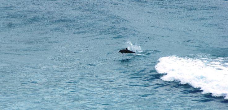 Dolphins in Byron Bay :)