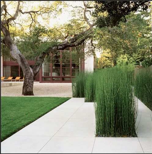 tiled path way with reeds Brookvale Residence, Andrea Cochran Landscape Architects | acochran.com