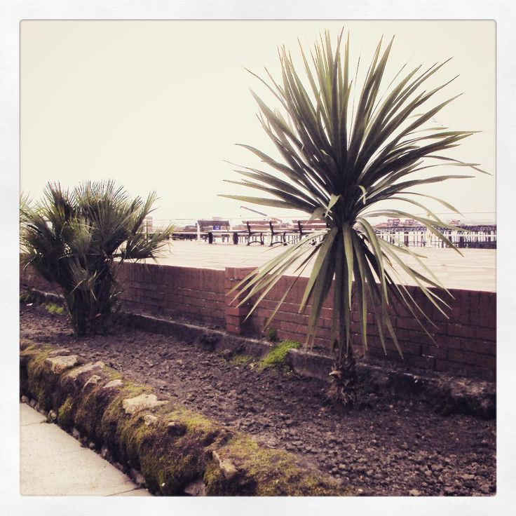 #stleonards #palm #sea #landscape #hastings #hastingspier (at Hastings Seafront)