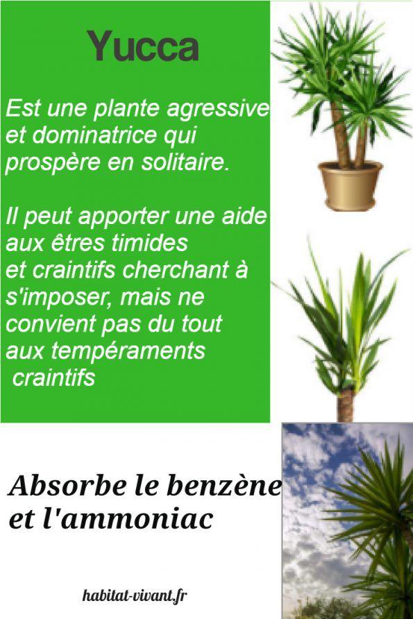 L Art De Placer Les Plantes En Groupe Main Verte Facile Et Bio