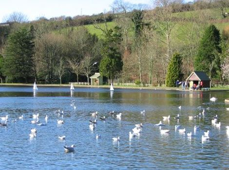 A lake in Helston  Coronation Lake where I walked my dog every day.
