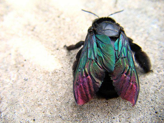 textured iridescent wings