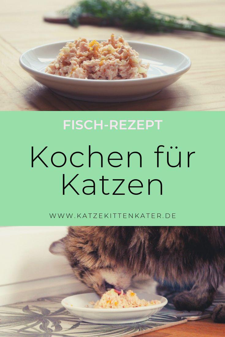 Fisch Rezept Katzenfutter Ganz Einfach Selber Kochen Katzen