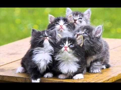 Kočičí kluci - či a či a či či čí - Karaoke písnička pro děti - Karaoke songs for children - YouTube