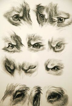 how to paint dog eyes looking down realistically - Google zoeken