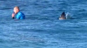 Surfer fights off shark in South Africa competition