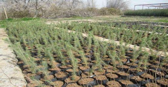 Son iki yılda 2.7 milyon liralık fidan üretildi