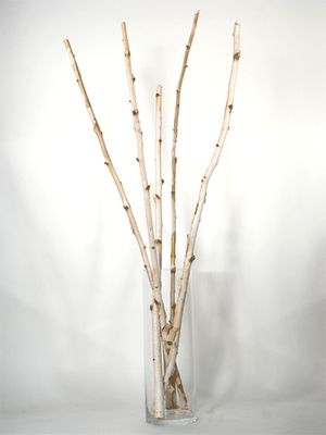 Decorating With Birch Tree Branches Birch Tree Trunks And Branches