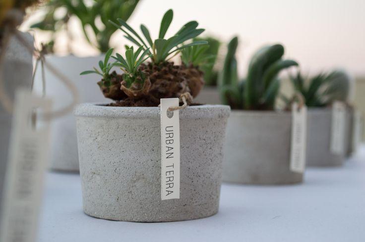 Euphorbia japonica //