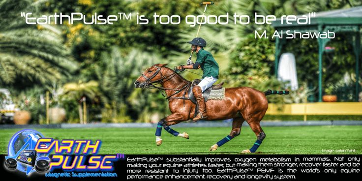 #Equine Performance Enhancement with #PEMF.  EarthPulse #EquinePEMF is  for champions :http://pemfhealing.in/equine-performance-enhancement-recovery-longevity/