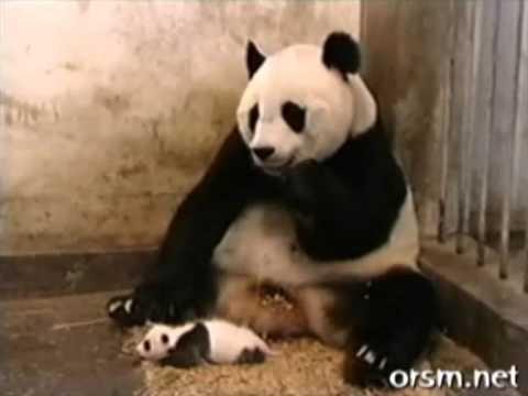 Top 10 Funny Animal Videos