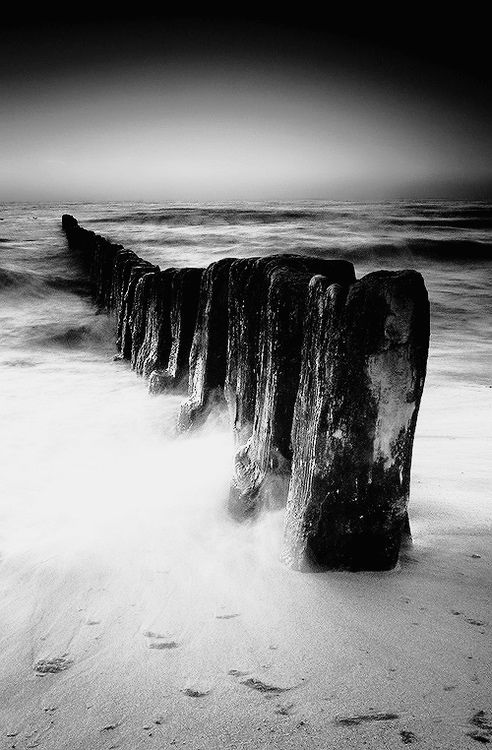 The power of nature by mjagiellicz (black and white version)