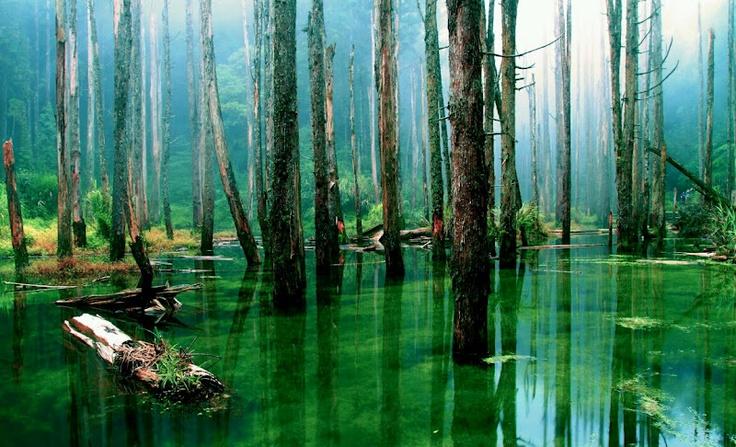 Swamp lands