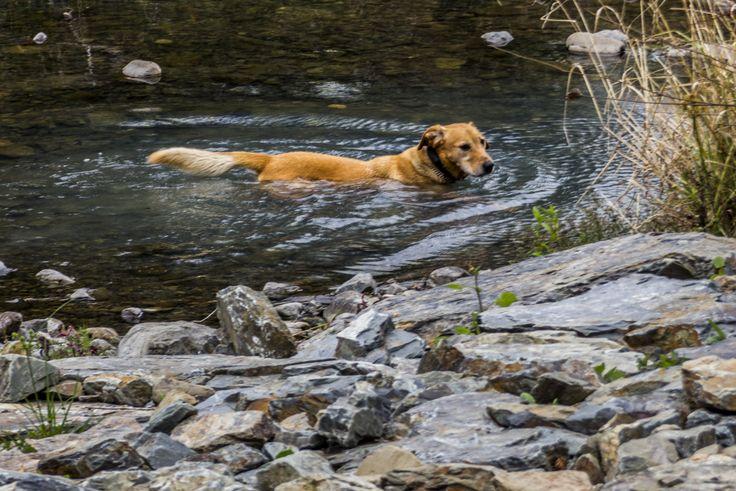 Fergus takes a quick dip