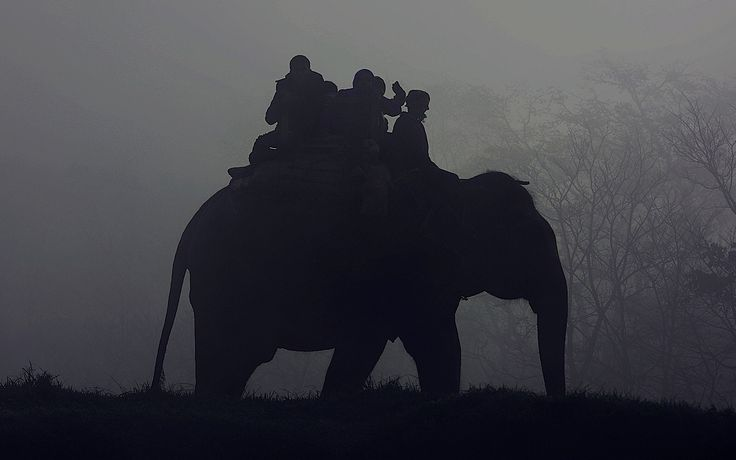 <p>A petition on Care2 written by World Animal Protection Australia explains that in the trekking industry, baby elephants are separated from their mothers, often from the wild, kept chained in isolation, and beaten and tortured until their spirits are crushed </p>