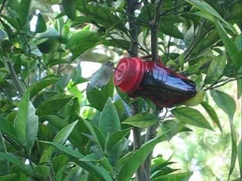 Hummingbird feeder made from Target pill bottle