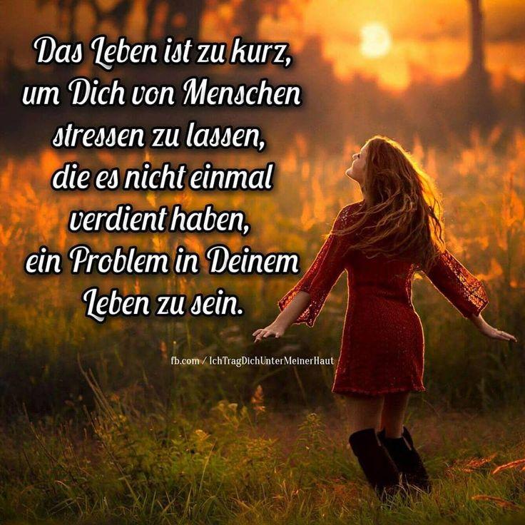 dreamies.de (tzt1cy9x86t.jpg)