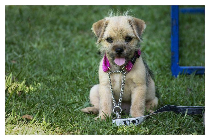 Cute puppies. puppy, dogs, pets, animals, adorable, photography, portraits